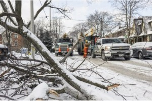 Photo from Toronto Star Article: January 2nd - Ice storm most 'devastating' event to hit Toronto's trees, climatologist says