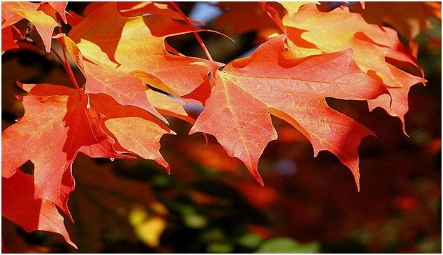 Fall foliage colour will vary from year to year and place to place depending on many factors.