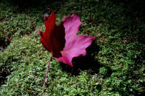 """""""The leaf is expendable and falls."""""""
