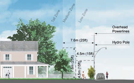 Illustration from ESA's Brochure - Planting Around Powerlines & Electrical Equipment