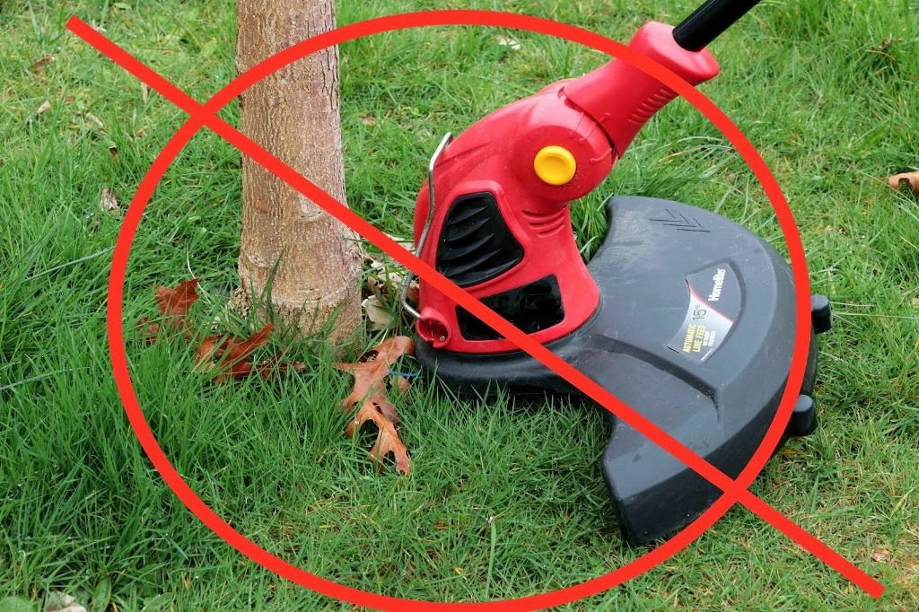 Keep string trimmers away from your trees. Use mulches to control weeds.