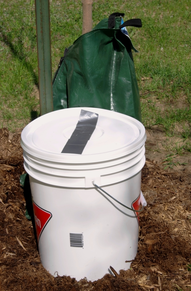 Alter the location of the bucket placement relative to the tree trunk by 90 degrees each time you water.